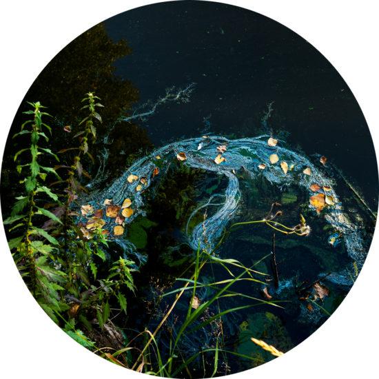 Cyanoscope, 2020